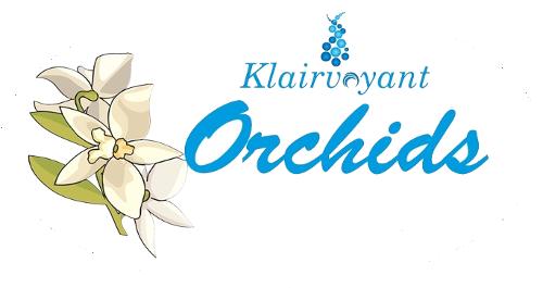 klairvoyant orchids