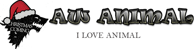 AW-AnimalShop